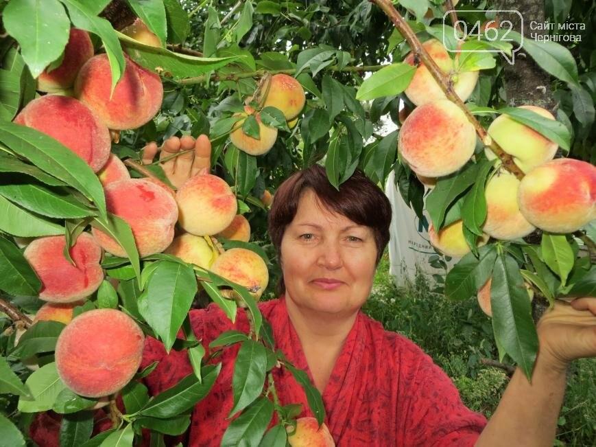 Секреты урожайных персиков от черниговки Надежды Гламазды, фото-1