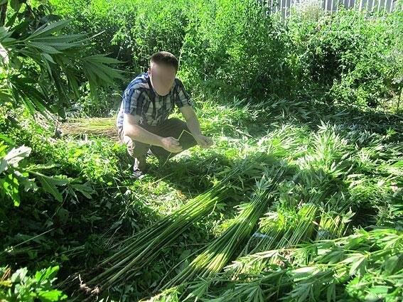 Житель Черниговщины на огороде вырастил элитной конопли на 2 миллиона, фото-3
