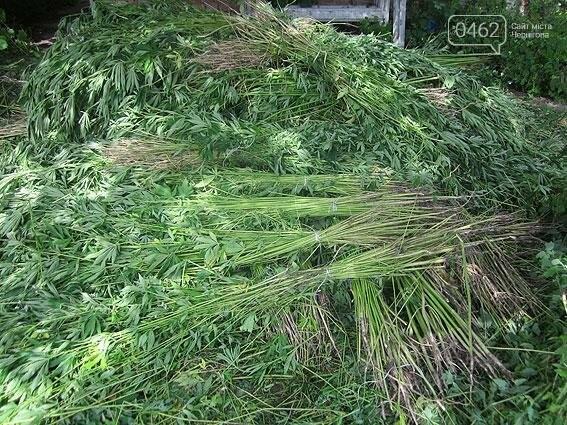 Житель Черниговщины на огороде вырастил элитной конопли на 2 миллиона, фото-5