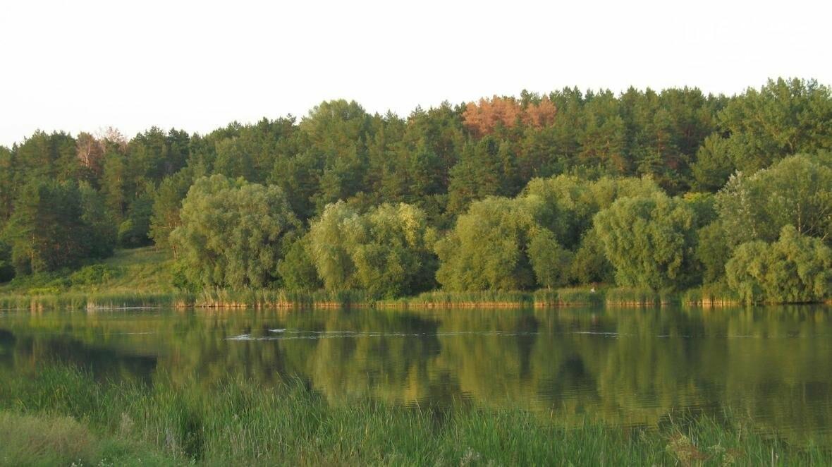 Рыжие пятна сосновых лесов вблизи Чернигова , фото-2
