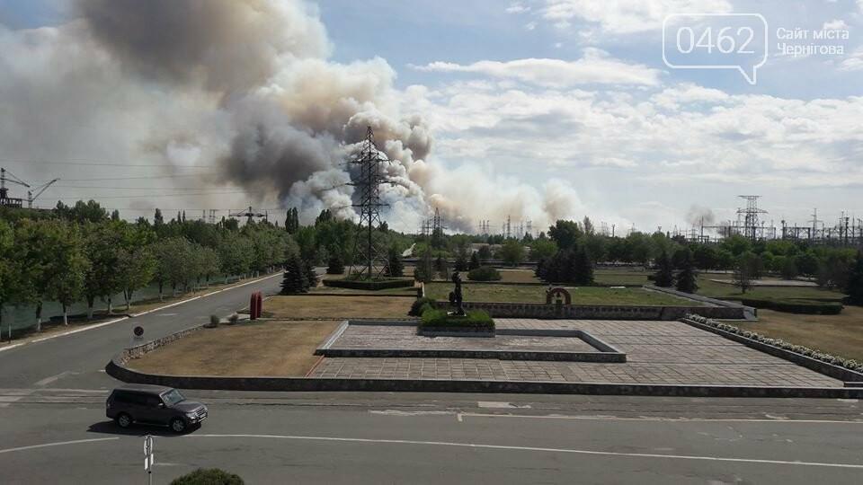 Спокойствие. «Рыжий» лес в Чернобыльской зоне не горел, фото-1