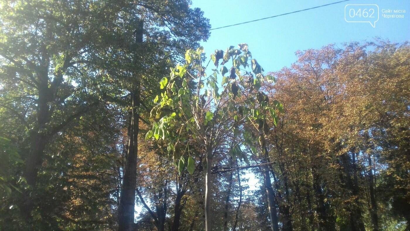 """У Чернігові засохло одне з """"дерев у вазонах"""", фото-1"""