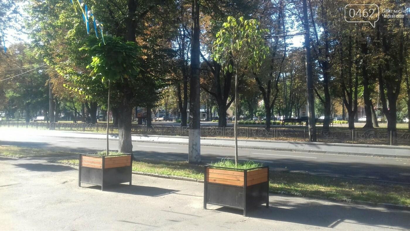 """У Чернігові засохло одне з """"дерев у вазонах"""", фото-2"""