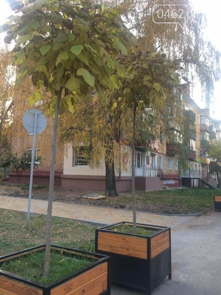 В «Зеленбуде» уверяют, что черниговские катальпы здоровы, фото-2