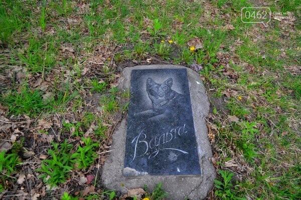 Чернигов стихийный - в городе внезапно появились кладбище домашних животных и свалка, фото-19