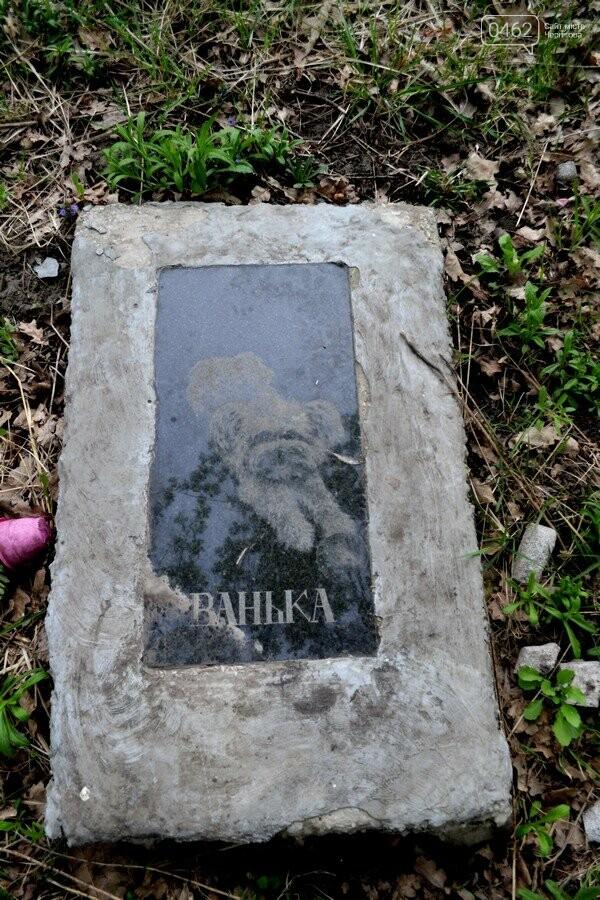 Чернигов стихийный - в городе внезапно появились кладбище домашних животных и свалка, фото-20