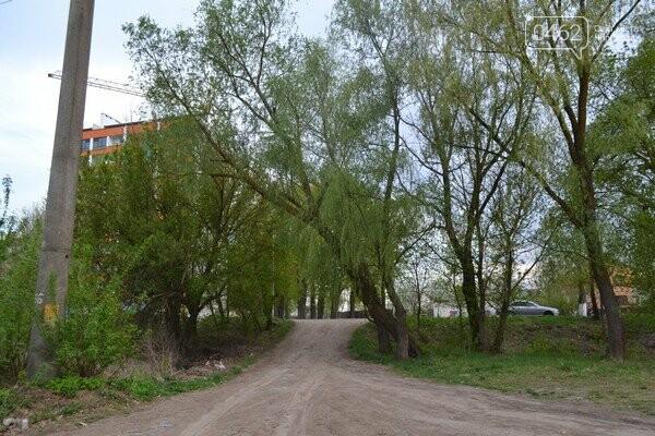 Чернигов стихийный - в городе внезапно появились кладбище домашних животных и свалка, фото-2