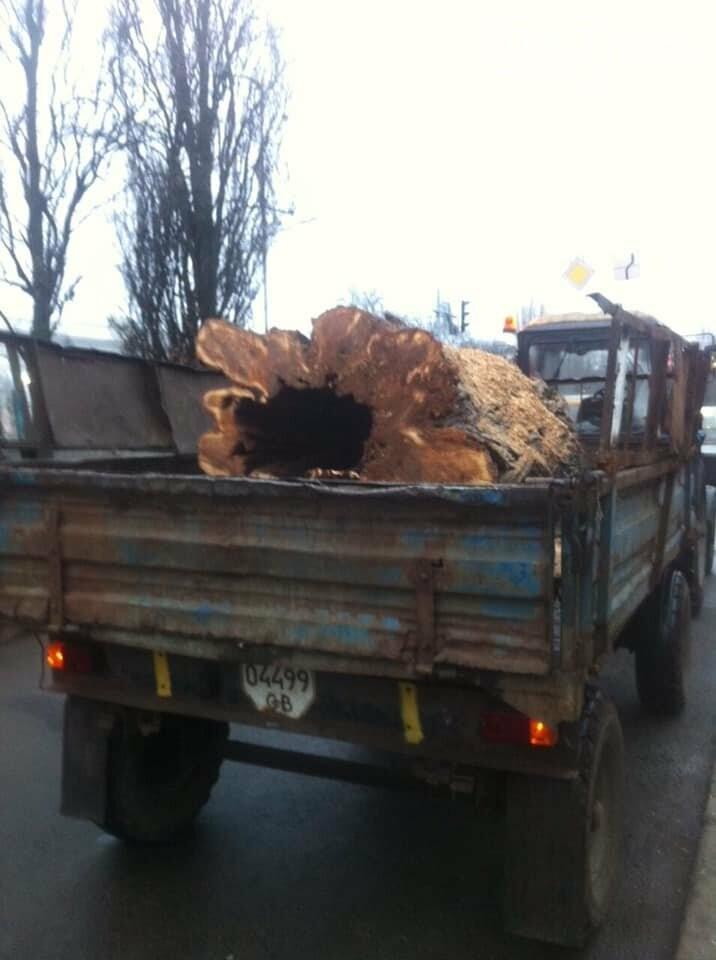 В центрі Чернігова – на перехресті двох проспектів – знесли дерево, фото-5