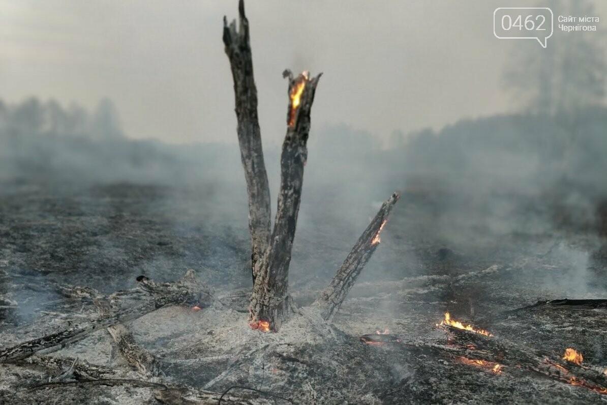 Палив сміття – згорів сам. В Чернігівській області – 32 пожежі за добу, фото-6