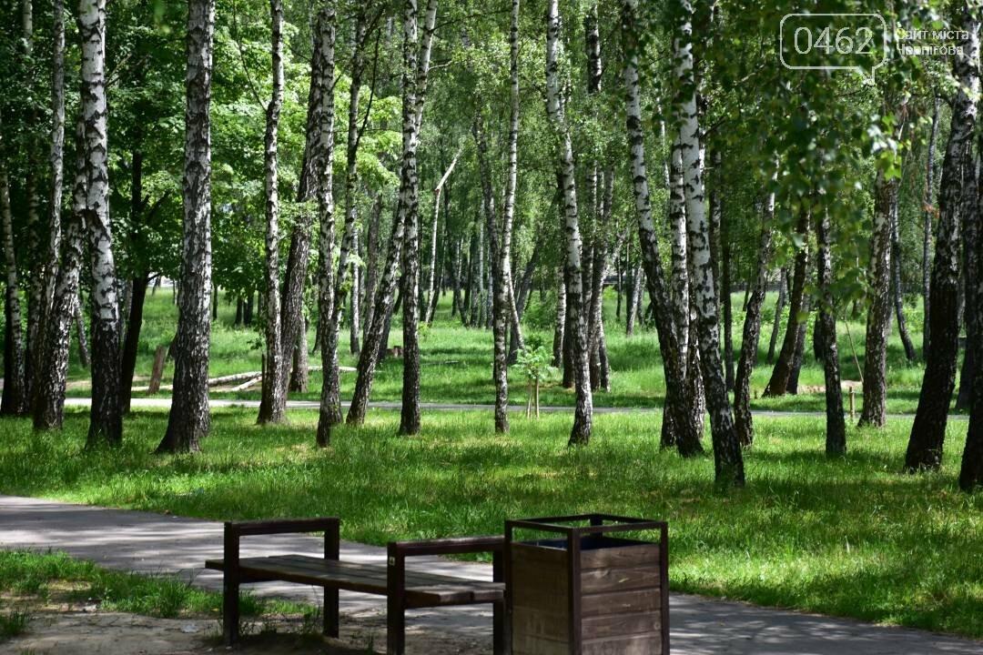 Березовий гай у Чернігові приведуть до ладу, фото-7