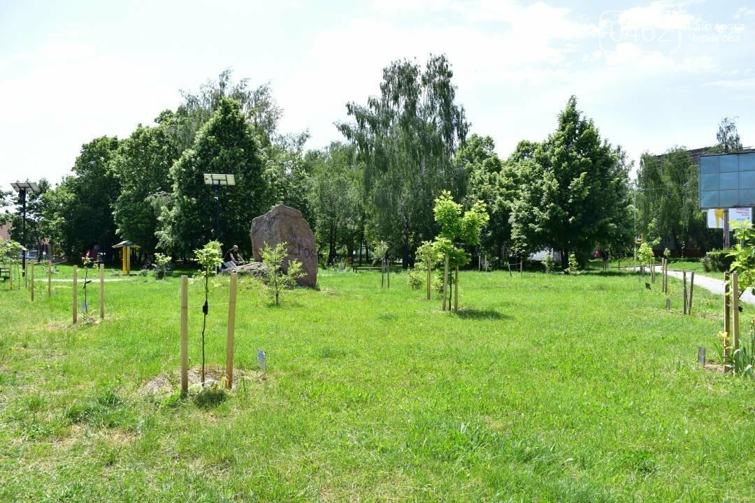 Березовий гай у Чернігові приведуть до ладу, фото-1