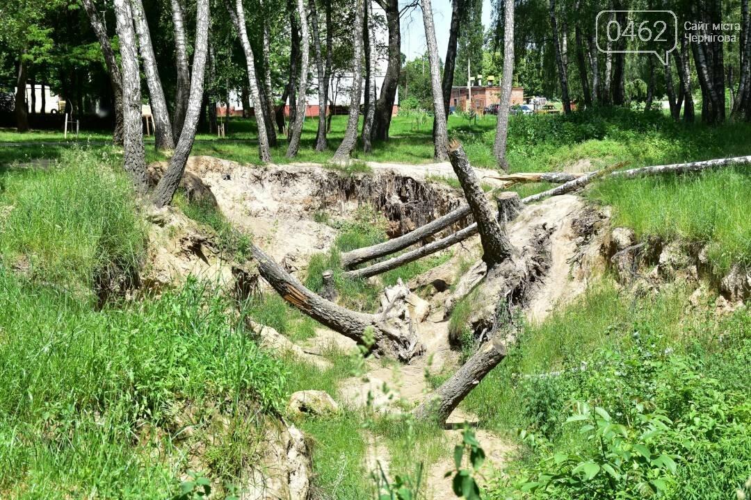 Березовий гай у Чернігові приведуть до ладу, фото-8