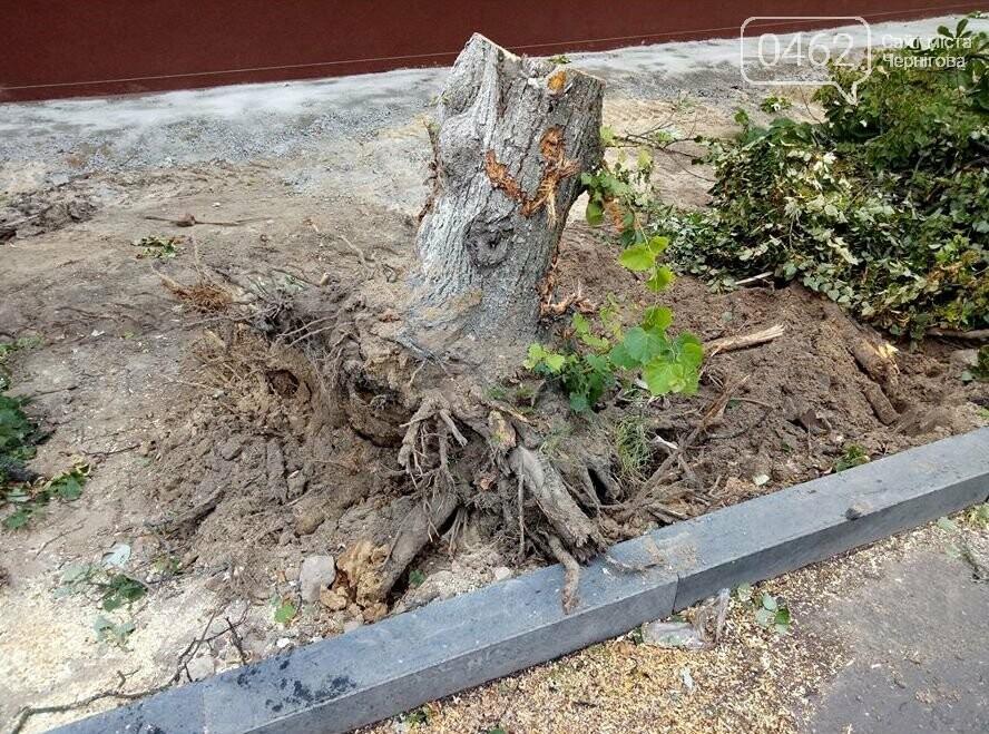 На вулиці Гончій у Чернігові спиляли дерева заради оновлення тротуару, фото-3
