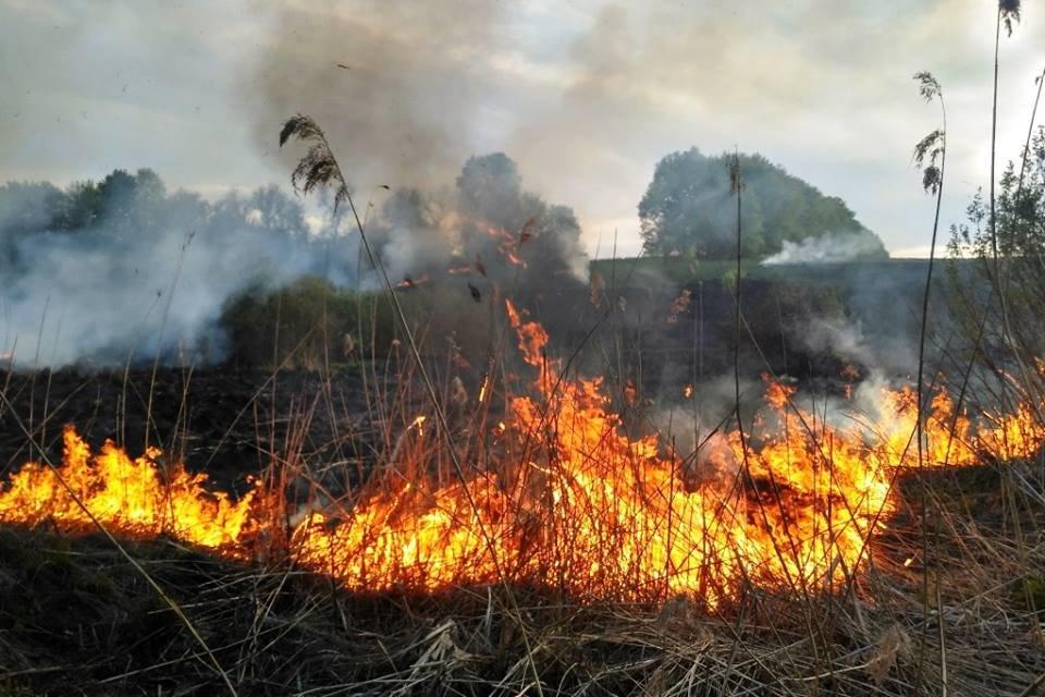 На Чернігівщині літній чоловік загинув, випалюючи залишки кукурудзи, фото-1