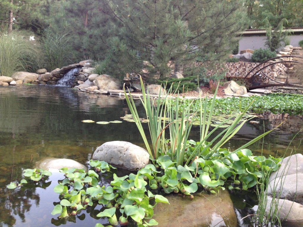 Садовый центр «Art Land» готов предоставить для вас лучшие растения, фото-10