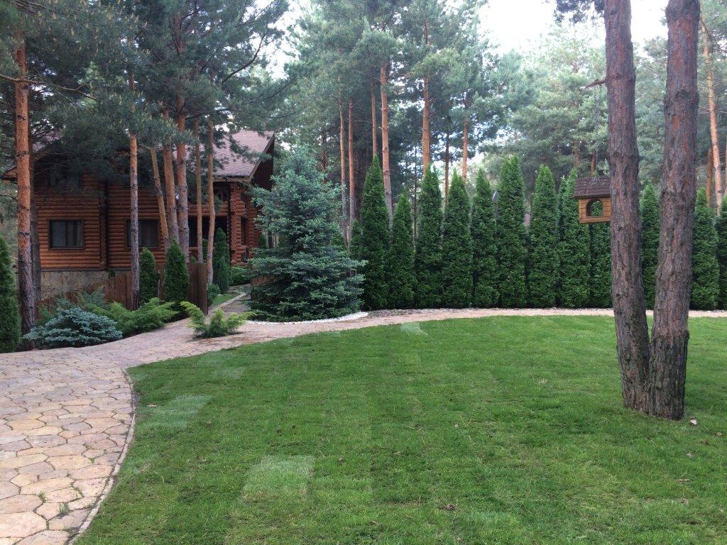 Садовый центр «Art Land» готов предоставить для вас лучшие растения, фото-16