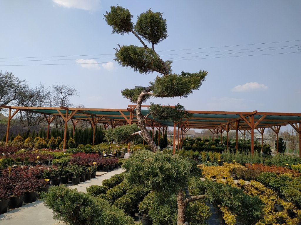 Садовый центр «Art Land» готов предоставить для вас лучшие растения, фото-19