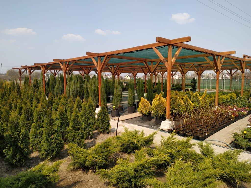 Садовый центр «Art Land» готов предоставить для вас лучшие растения, фото-20