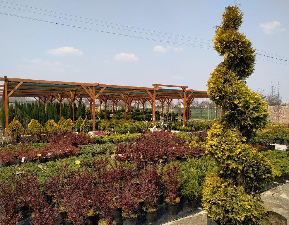 Садовый центр «Art Land» готов предоставить для вас лучшие растения, фото-21