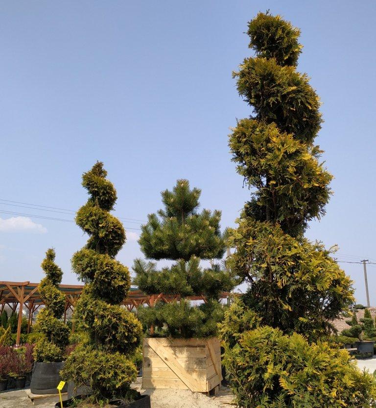 Садовый центр «Art Land» готов предоставить для вас лучшие растения, фото-22