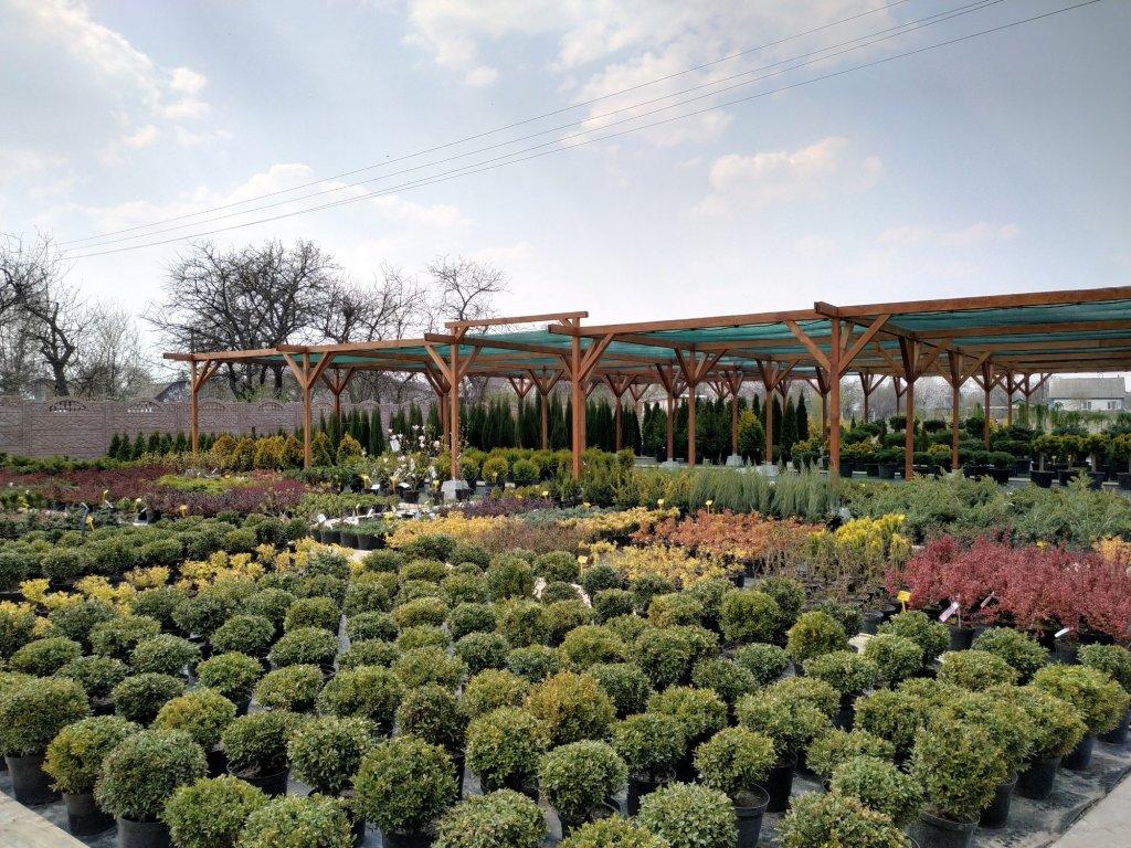Садовый центр «Art Land» готов предоставить для вас лучшие растения, фото-23