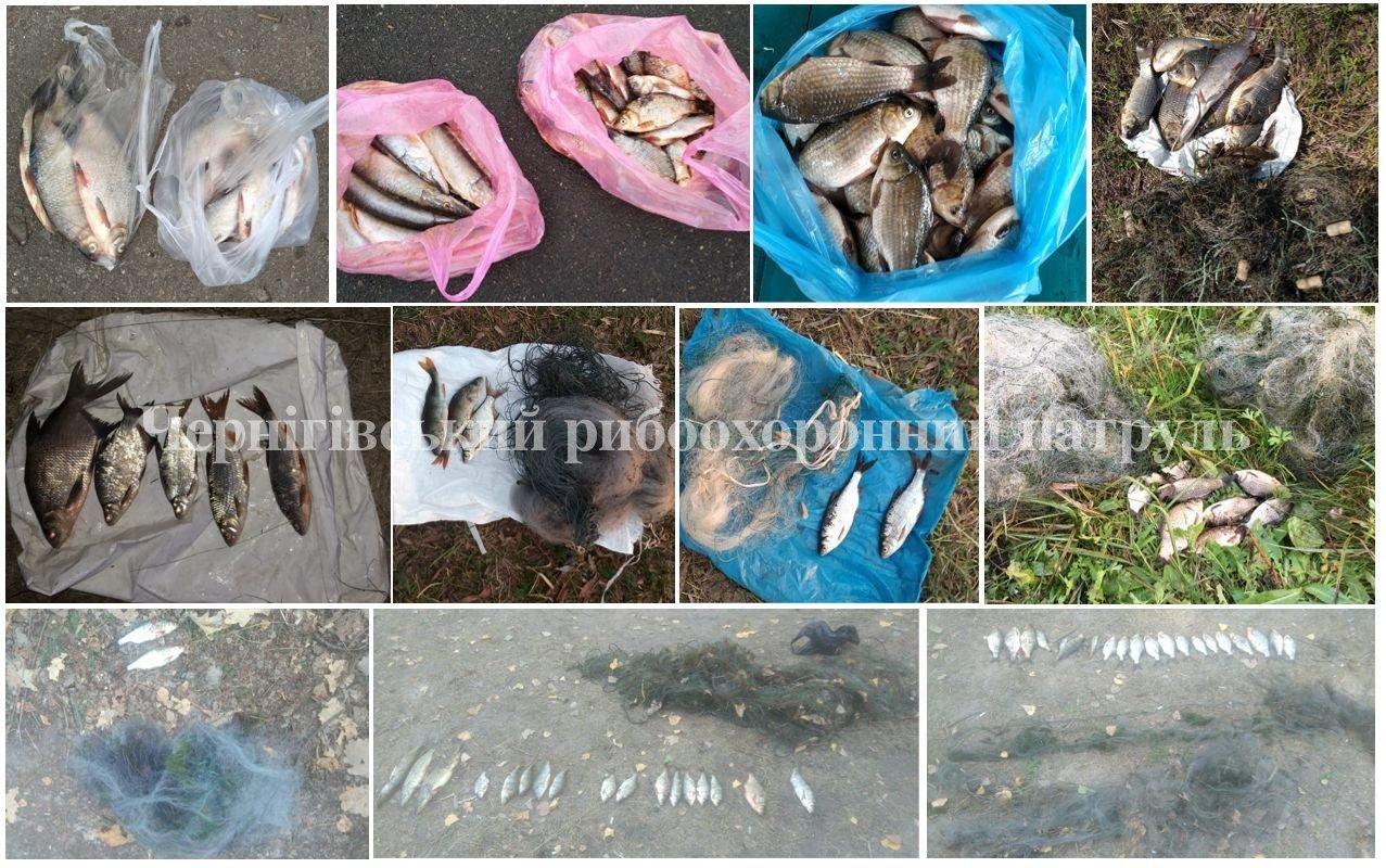 Чернігівські браконьєри за вересень виловили не одну сотню кілограм риби, фото-2