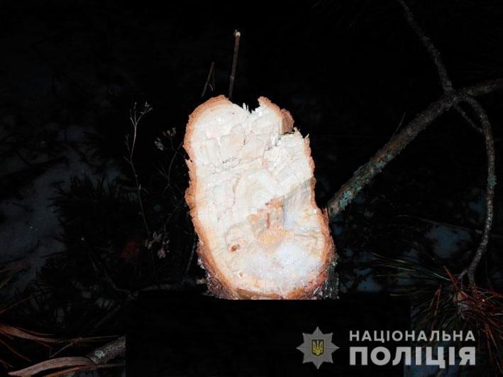 На Новый Год: в лесничестве на Черниговщине незаконно вырубали деревья, фото-4