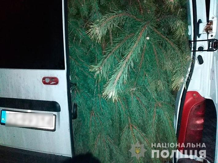 На Новый Год: в лесничестве на Черниговщине незаконно вырубали деревья, фото-3