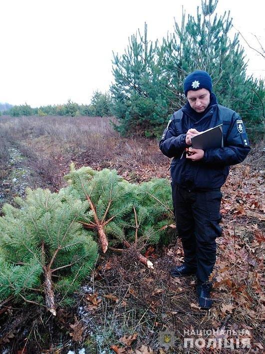 На Новый Год: в лесничестве на Черниговщине незаконно вырубали деревья, фото-2