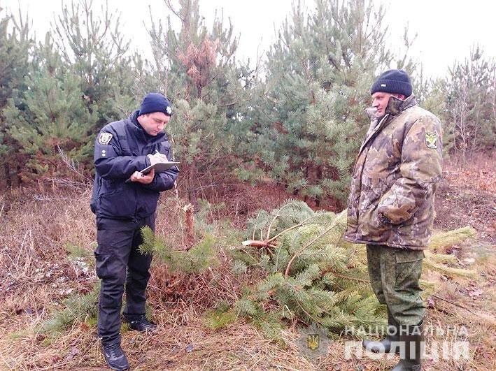 На Новый Год: в лесничестве на Черниговщине незаконно вырубали деревья, фото-1