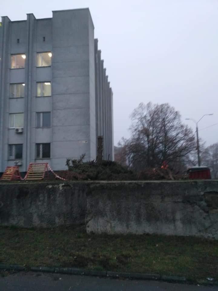Операция по спасению ёлки провалилась: из-за прорыва трубы в Чернигове пришлось срубить дерево, фото-2