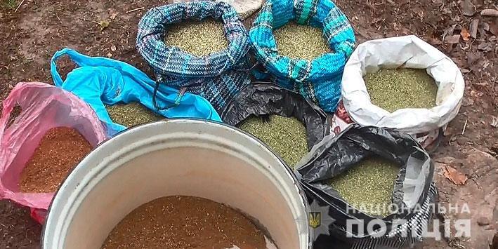 Промышленный масштаб: житель Черниговщины вырастил 25 тысяч кустов конопли, фото-1