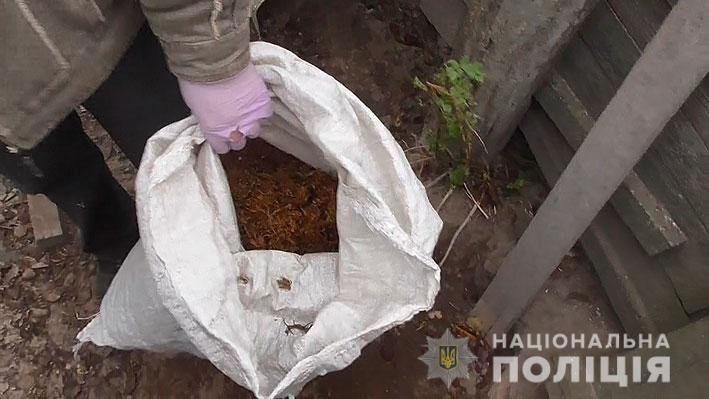 Промышленный масштаб: житель Черниговщины вырастил 25 тысяч кустов конопли, фото-2