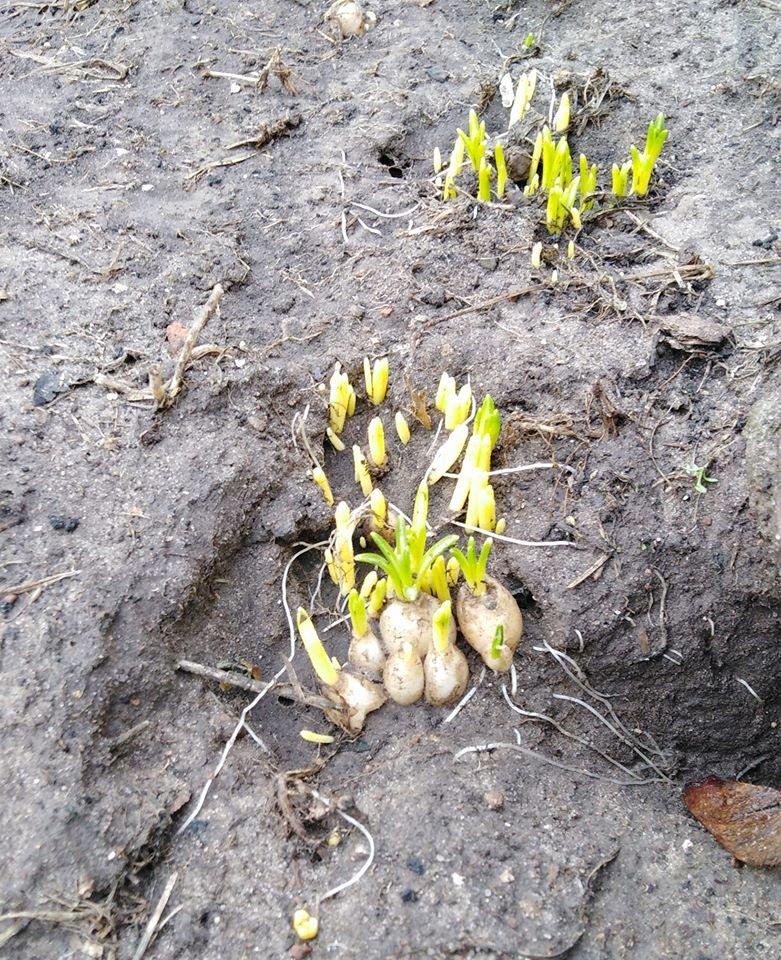 Весна серед зими у Чернігові: що чекає на природу?, фото-2
