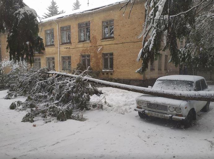 Вывернутые с корнем деревья и пропавшее электричество: проблемы от непогоды на Черниговщине, фото-2