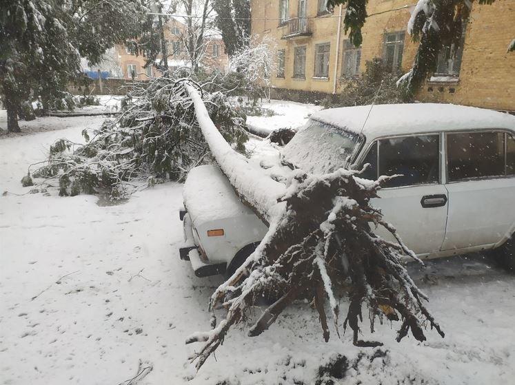 Вывернутые с корнем деревья и пропавшее электричество: проблемы от непогоды на Черниговщине, фото-3