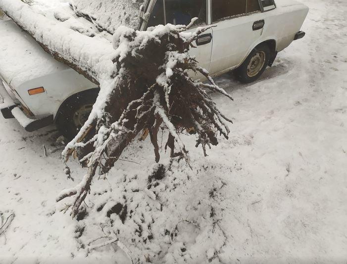 Вывернутые с корнем деревья и пропавшее электричество: проблемы от непогоды на Черниговщине, фото-4