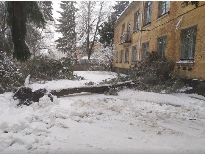 Вывернутые с корнем деревья и пропавшее электричество: проблемы от непогоды на Черниговщине, фото-7