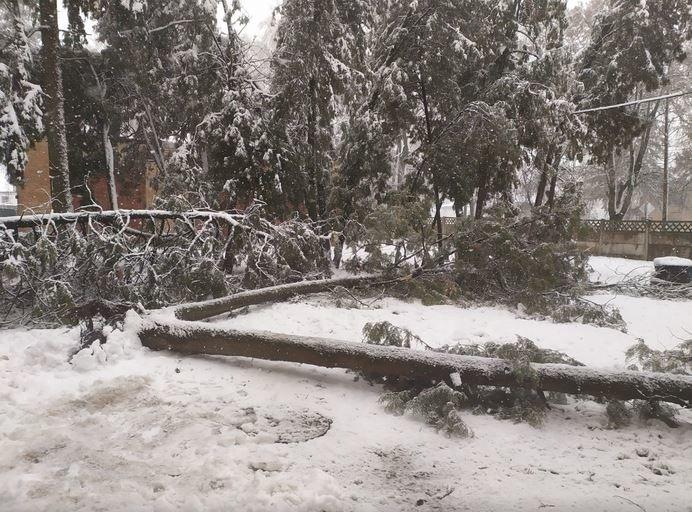 Вывернутые с корнем деревья и пропавшее электричество: проблемы от непогоды на Черниговщине, фото-8