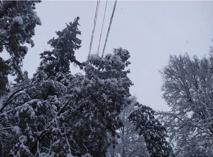 Вывернутые с корнем деревья и пропавшее электричество: проблемы от непогоды на Черниговщине, фото-5