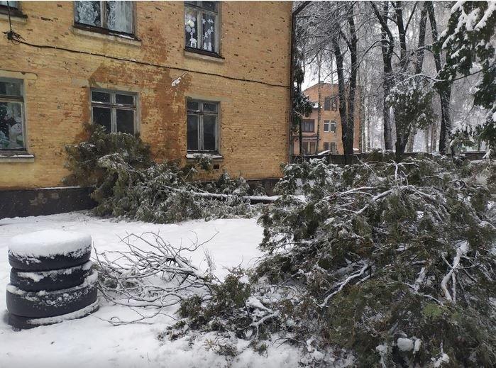 Вывернутые с корнем деревья и пропавшее электричество: проблемы от непогоды на Черниговщине, фото-6