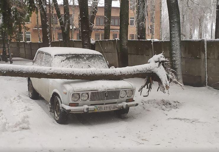 Вывернутые с корнем деревья и пропавшее электричество: проблемы от непогоды на Черниговщине, фото-1