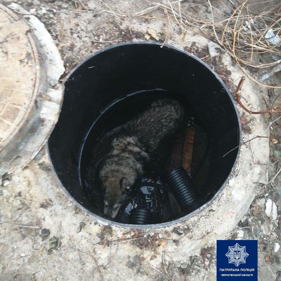 У Чернігові собака впала у відкриту шахту колодязя: її врятували, фото-1