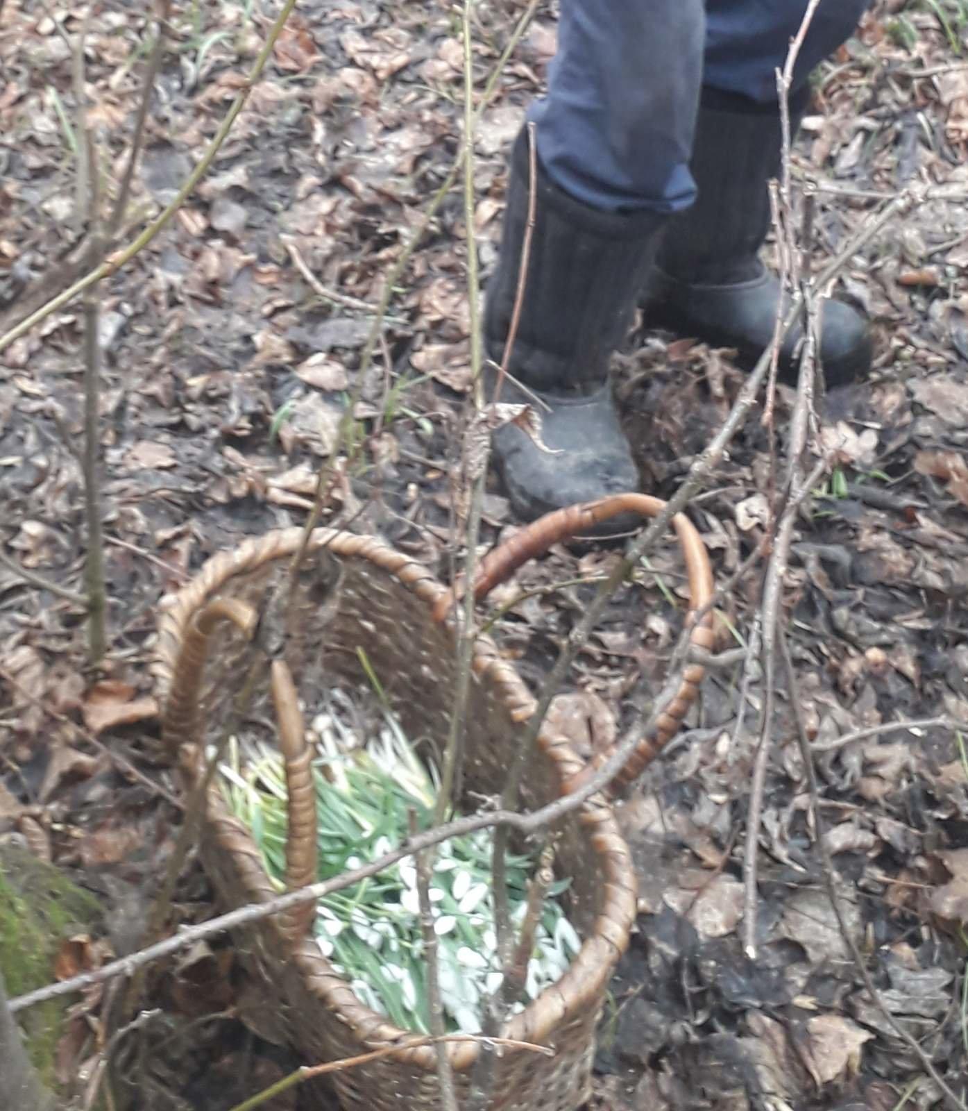 Весна пришла: житель Черниговщины попытался украсть подснежники, фото-1