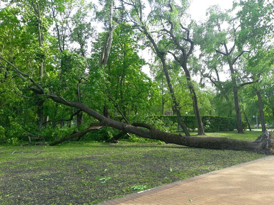 Буревій у Чернігові повалив одразу кілька дерев: є понівечені автівки, фото-3