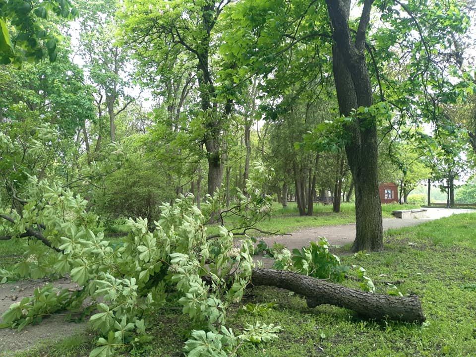 Буревій у Чернігові повалив одразу кілька дерев: є понівечені автівки, фото-4
