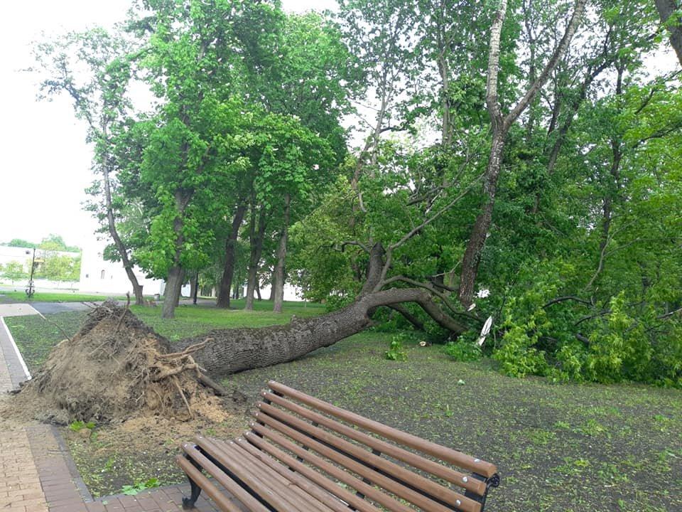 Буревій у Чернігові повалив одразу кілька дерев: є понівечені автівки, фото-2