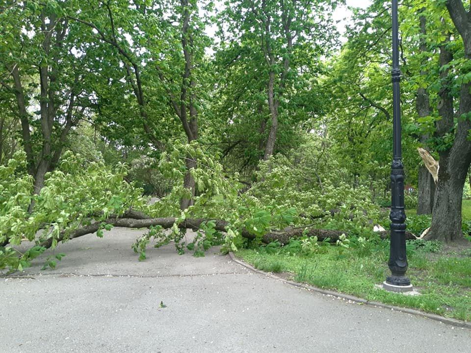 Буревій у Чернігові повалив одразу кілька дерев: є понівечені автівки, фото-5