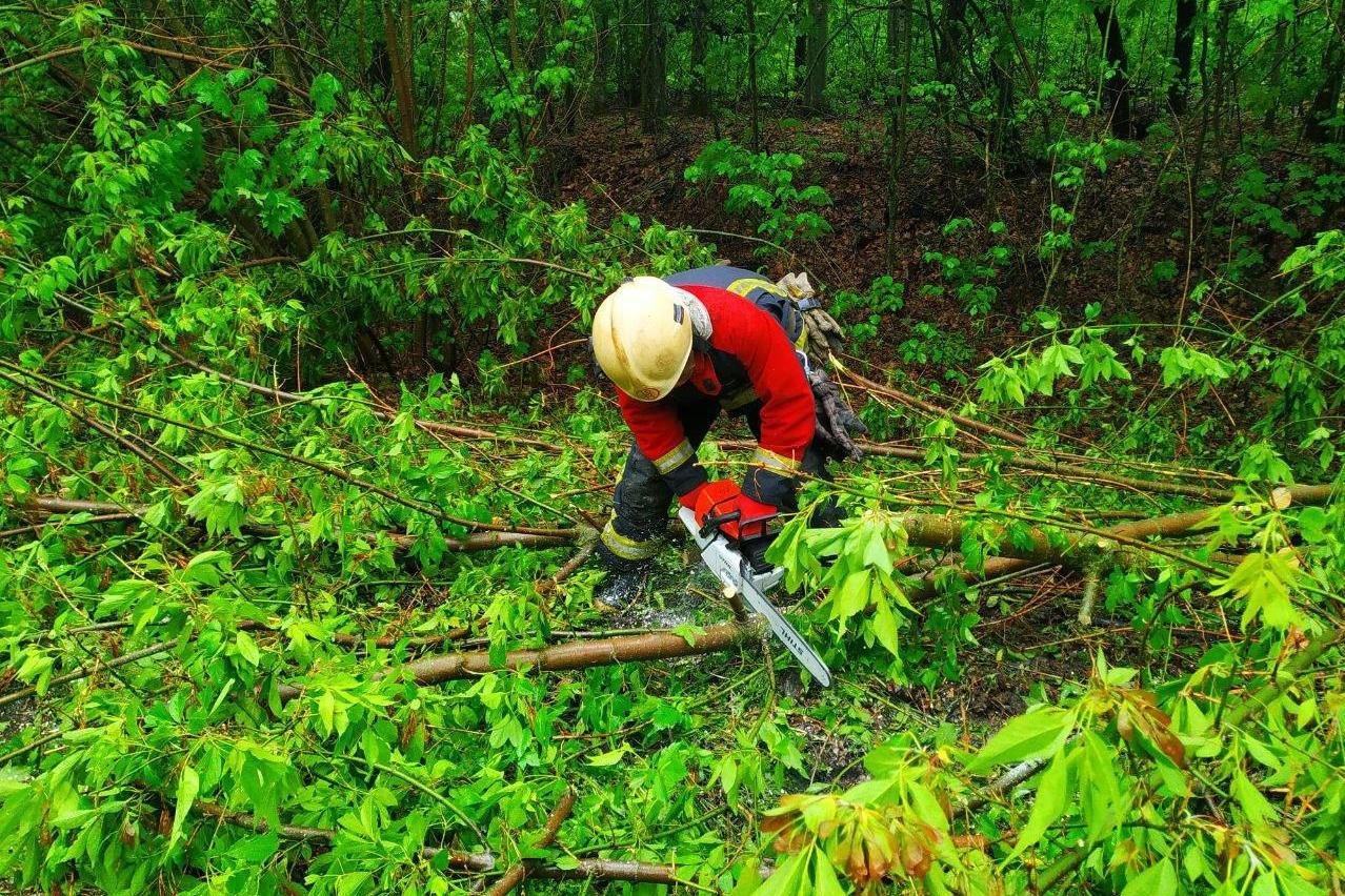 Автівка влетіла у дерево на Чернігівщині: рятувальники прийшли на допомогу, фото-4