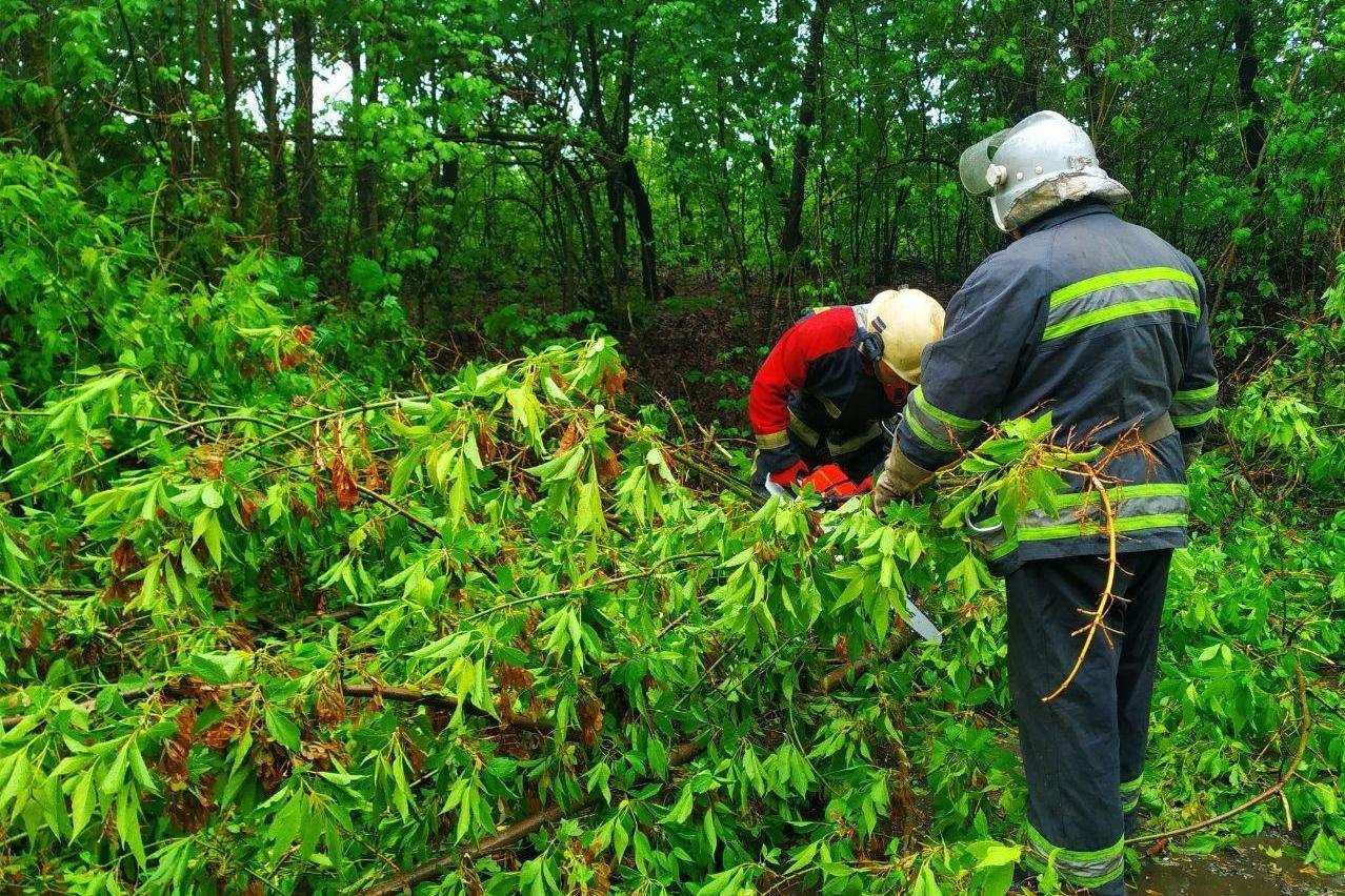 Автівка влетіла у дерево на Чернігівщині: рятувальники прийшли на допомогу, фото-3